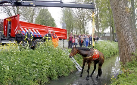 Lange wandeling van ontsnapt paard eindigt in sloot for Paard aan huis te koop