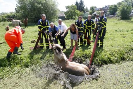 Paard In Nood Gered Dordtcentraal Gratis Huis Aan Huis